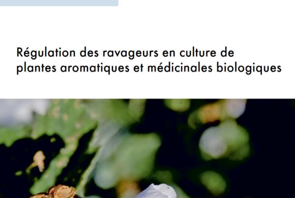 (Français) Régulation des ravageurs en PAM bio: fiche technique